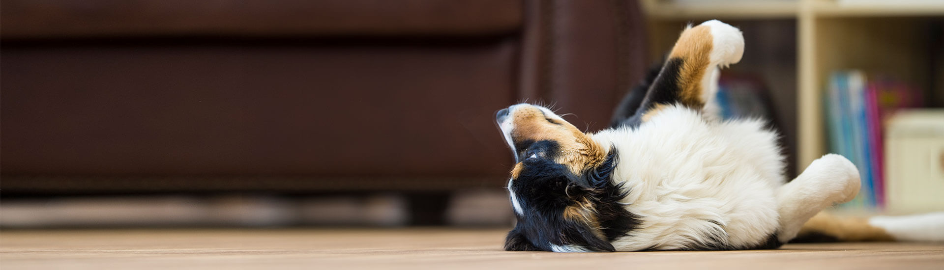 Learn about flea and tick allergies and your pet