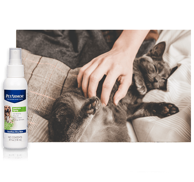thumbnail skin & coat care image